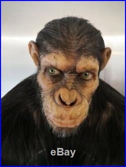 Caesar Life size Bust 1/1 Planet of the Apes The origins Very Rare No SIDESHOW